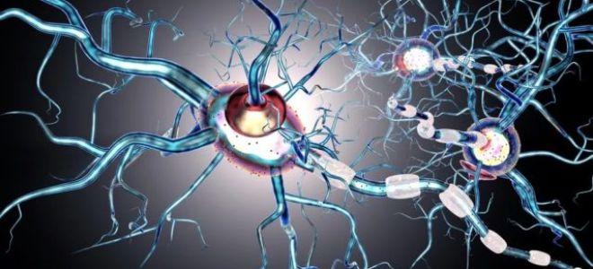 Есть ли ген рассеянного склероза? Вопросы наследственности РС