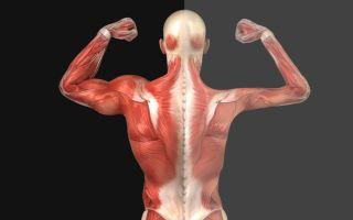Нервно-мышечные заболевания: этимология, классификация, симптомы и лечение