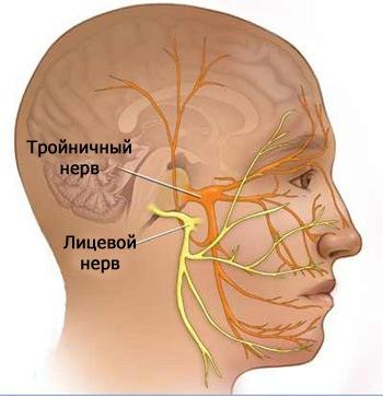 Нервы в голове