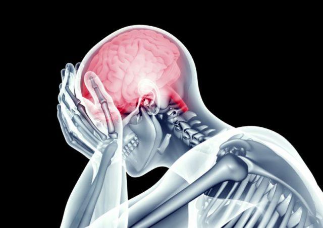 Скелет и мозг